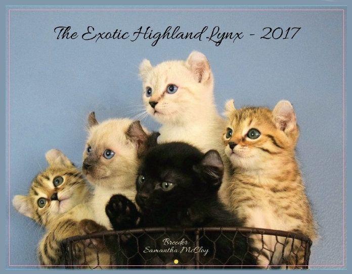 2017 Highland Lynx Cat Calendar