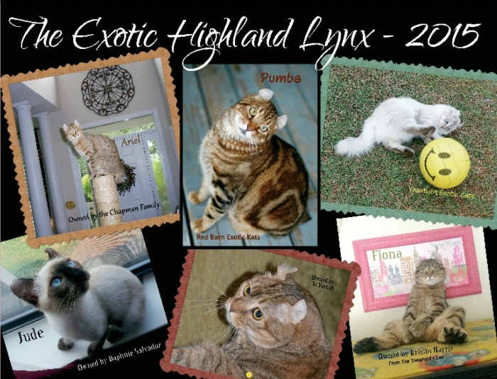 Highland Lynx Cat Calendar 2015